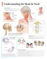 Understanding the Head & Neck