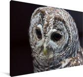 Bosuil op een zwarte achtergrond Canvas 30x20 cm - klein - Foto print op Canvas schilderij (Wanddecoratie woonkamer / slaapkamer)