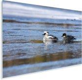 Twee nonnetjes in het water Plexiglas 60x40 cm - Foto print op Glas (Plexiglas wanddecoratie)