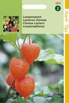 Hortitops Zaden - Physalis Franchetti Gig.(Lampionplant)
