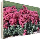 Roze hemelsleutel in de natuur Vurenhout met planken 90x60 cm - Foto print op Hout (Wanddecoratie)