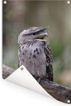 Uilnachtzwaluw op een tak Tuinposter 60x90 cm - Tuindoek / Buitencanvas / Schilderijen voor buiten (tuin decoratie)
