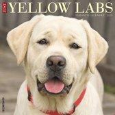 Labrador Retriever Blond Kalender 2020