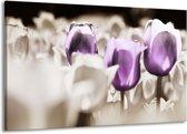Canvas schilderij Tulpen | Paars, Grijs, Wit | 140x90cm 1Luik