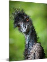 Een emoe kijkt recht in de camera Aluminium 120x180 cm - Foto print op Aluminium (metaal wanddecoratie) XXL / Groot formaat!