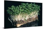 De groene tuinkers met een zwarte achtergrond Aluminium 60x40 cm - Foto print op Aluminium (metaal wanddecoratie)
