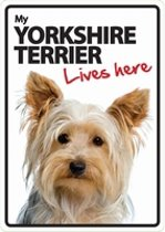 Yorkie lives here