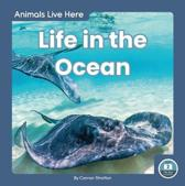 Animals Live Here: Life in the Ocean