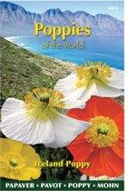 Buzzy Seeds - IJslandse Papaver