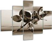 Glas schilderij Roos, Bloem | Sepia | 100x70cm 5Luik | Foto print op Glas |  F007056
