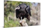 Een zwarte gier zit op een boomstam Aluminium 180x120 cm - Foto print op Aluminium (metaal wanddecoratie) XXL / Groot formaat!