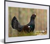 Foto in lijst - Een gekleurde Auerhoen fotolijst zwart met witte passe-partout klein 40x30 cm - Poster in lijst (Wanddecoratie woonkamer / slaapkamer)