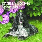 Browntrout Publishers, I: English Cocker Spaniels 2020 Squar