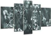 Glas schilderij Bloemen, Lente | Grijs, Groen | 170x100cm 5Luik | Foto print op Glas |  F006813