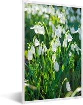 Foto in lijst - Veld van sneeuwklokjes fotolijst wit 40x60 cm - Poster in lijst (Wanddecoratie woonkamer / slaapkamer)