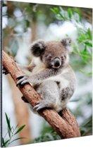 Koala op boom Aluminium 120x180 cm - Foto print op Aluminium (metaal wanddecoratie) XXL / Groot formaat!