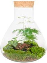 Kamerplant van Botanicly – Erlenmeyer met Cork Large - Botanic Mix – Hoogte: 29 cm
