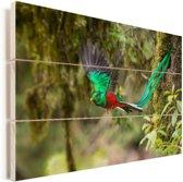 Mannelijke kleurrijke quetzal tijdens vlucht Vurenhout met planken 120x80 cm - Foto print op Hout (Wanddecoratie)
