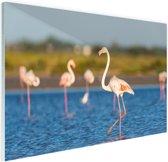 Groep Europese flamingos Glas 60x40 cm - Foto print op Glas (Plexiglas wanddecoratie)