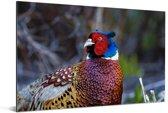 Een kleurrijke fazant in de natuur Aluminium 60x40 cm - Foto print op Aluminium (metaal wanddecoratie)