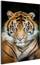 Sumatraanse tijger zwarte achtergrond Aluminium 120x180 cm - Foto print op Aluminium (metaal wanddecoratie) XXL / Groot formaat!