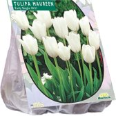 Tulpenbol Maureen - 2 x 20 stuks