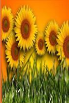 Floral Journal Sunflower Field