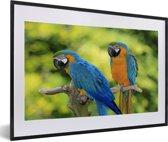 Foto in lijst - Blauwkeelara's op een takje naast elkaar fotolijst zwart met witte passe-partout 60x40 cm - Poster in lijst (Wanddecoratie woonkamer / slaapkamer)
