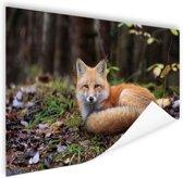Rustende vos Poster 90x60 cm - Foto print op Poster (wanddecoratie woonkamer / slaapkamer) / Dieren Poster