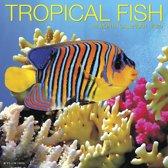 Tropical Fish Kalender 2020