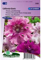 Sluis Garden - Petunia Californian Giants