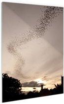 Grote groep vleermuizen Glas 120x180 cm - Foto print op Glas (Plexiglas wanddecoratie) XXL / Groot formaat!