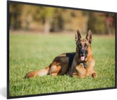 Foto in lijst - Duitse herdershond ligt op het gras fotolijst zwart 60x40 cm - Poster in lijst (Wanddecoratie woonkamer / slaapkamer)