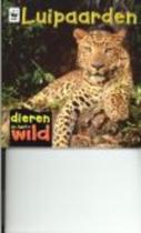 Dieren in het wild - Luipaarden
