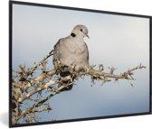 Foto in lijst - Een tortelduif zit hoog in een boom fotolijst zwart 60x40 cm - Poster in lijst (Wanddecoratie woonkamer / slaapkamer)