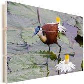 Een Afrikaanse jacana tussen de waterlelies Vurenhout met planken 120x80 cm - Foto print op Hout (Wanddecoratie)