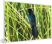 Foto in lijst - Zwarte bootstaarttroepiaal tussen het groene gras fotolijst wit 60x40 cm - Poster in lijst (Wanddecoratie woonkamer / slaapkamer)