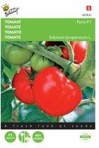 Tomaten Pyros F1 - Lycopersicon esculentum - set van 5 stuks