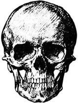 Skull Notebook Journal Wide Ruled