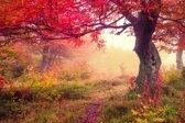 Papermoon Autumn Trees Vlies Fotobehang 250x186cm 5-Banen