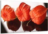 Glasschilderij Keuken | Oranje, Wit | 120x70cm 1Luik | Foto print op Glas |  F004961