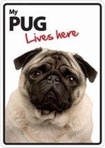 Pug lives here