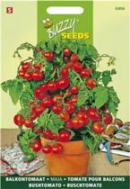 2 stuks Buzzy Tomaten Maja Balkontomaat