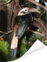 Panay-neushoornvogel op een tak tussen de bladeren Poster 60x80 cm - Foto print op Poster (wanddecoratie woonkamer / slaapkamer)