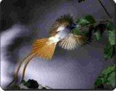 Kolibrie Muismat