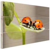 Twee lieveheersbeestjes op blad Hout 30x20 cm - Foto print op Hout (Wanddecoratie)
