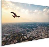 Adelaar vliegt boven Lahore Plexiglas 80x60 cm - Foto print op Glas (Plexiglas wanddecoratie)