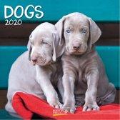 Kalender 2020 honden (30 x 30)