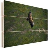 Luchtfoto van een vliegende  oorgier Vurenhout met planken 60x40 cm - Foto print op Hout (Wanddecoratie)