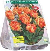Bloembol Tulipa Willem van Oranje - 2 x 20 stuks